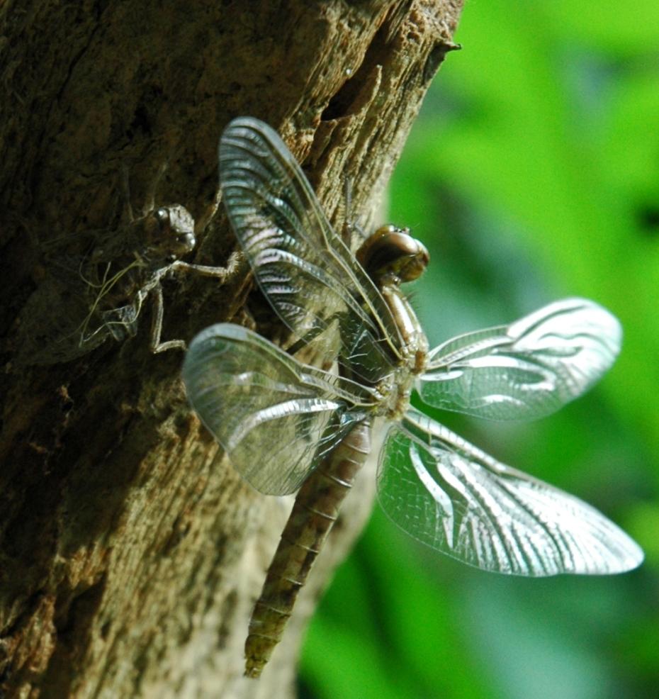 dragonflysmaller (2)