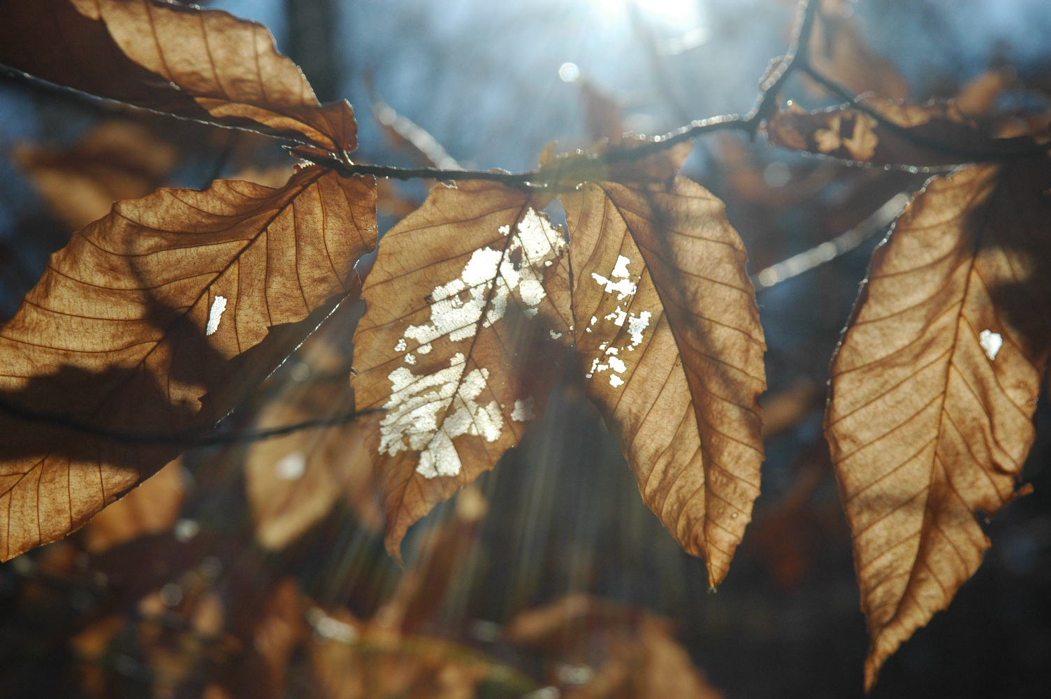 leaves and light