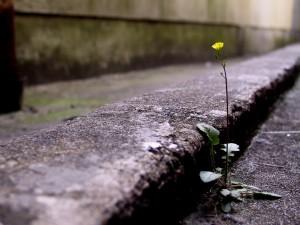 yellow flower in street(2)